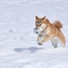 今日は「大雪」~十二月節の始まり