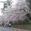 観桜会 弘前公園