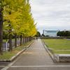 昭和記念公園のコスモス(10月29日)
