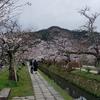 ☆哲学の道の桜🌸3