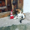 猫天国ニャンジバル! Cat's heaven Nyanzibar!