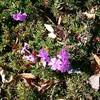 初冬でも まだまだ元気な植物たち