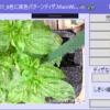 WPF、画像をディザパターンを使って8色に減色して保存するアプリ