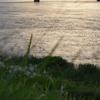 週末ライフ。「五月雨の頃。五月闇の隙間を縫って射し込んだ日暮れ時のオレンジ色は、川面が映す夏至の夕陽」の巻。