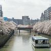 横浜さんぽ11☆今年も桜散歩(2021)…その2