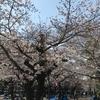 桜の開花状況を見に平日の昼間から鶴舞公園に来てみた結果・・・