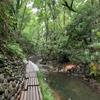 谷だ、谷をみたいんだ〜!東京23区、唯一の渓谷・等々力渓谷で森林浴