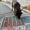 怪談 サンの「排水溝コワイ」の巻〜٩(๑꒦ິȏ꒦ິ๑)۶ 怖クナンテナイモン!