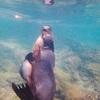 【ガラパゴス旅行記2】(4)イサベラ島のアシカと泳げる入り江Concha de PerlaとLos Tuneles (ロス トンネル)