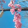 福岡は天気 すごく良かったよ