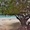 サメット島 その他のいくつかのビーチ~これでサメット島のビーチ巡りはこれで終了!!