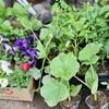 「佐久の季節便り」、「青葉・若葉」の候、野菜や花の苗を求め…。