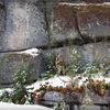 【遺跡】進撃の巨人の舞台か?ロシア世界最大の巨石群⁉