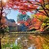 休業OLの紅葉通信【御殿山庭園】城南五山で紅葉を見下ろす。(ライトアップ有。)
