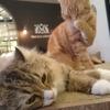 猫カフェMocha池袋東口店で、時間を気にせず癒しの時間を過ごしてきました。