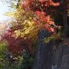 金沢城の紅葉(おまけ編)