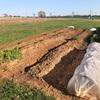 家庭菜園用の畑を4割程拡張。これでオクラも一杯食べられるかな。