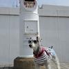 ❝犬吠埼灯台❞ 愛犬とおでかけ-千葉県観光🎵  2021年3月19日②