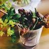 山葵中毒者のお刺身、そしてキハダマグロの美味しさについて