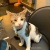 【イギリスの保護猫カフェ】Java Whiskers ロンドン