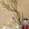 枯れ木でインテリア【流木DIY】