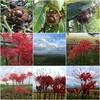 コシヒカリの発送と「秋の詩」の稲刈りと秋分の日と「Bluesette」