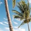 【おすすめ10選】Matomaの定番曲!夏の海で聴きたいトロピカルハウス!