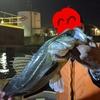 ★ ① 東京湾奥ボート ナイト☆彡シーバス 入れ食いなので検証してみた ① ~ シーバスもブラックバスルアーの方が釣れるんじゃね?!~