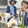 湯島「猫島ツアー」人気 「観光の目玉」住民歓迎