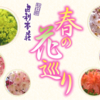 由利本荘「春の花巡り」西目「桜、菜の花祭り編」①(全5回)