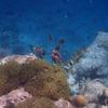 ニモたちがいるエリア ラヴィヤニ環礁 クダドゥモルディブ