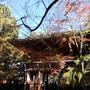 紅葉を愛でる小金たび1 〜東漸寺