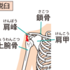 肩関節脱臼
