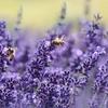 ミツバチの重要性について