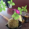 箱根を食べよう vol.3 「エクシブの朝食」とか「とらや工房」とか