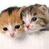 人気のペットランキング!日本ではどんなペットが飼われているの?