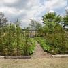 君津のファームの庭 2・・・うっとりホワイト・ガーデン