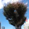 木屋町ホーンズの東京公演 vol.3
