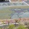 花の駅せら:旧世羅ゆり園②