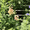 風が強い日の庭