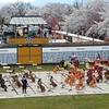 天童の人間将棋は『3月のライオン』と桜満開で例年3倍来場の大盛況