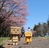 新ひだか町 日本最大級の桜並木、静内二十間道路の桜並木