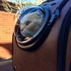 リュック型宇宙船と猫の移動方法