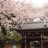 迷ったら全部行けばいいのです~東京都心お花見スポット一筆書き!