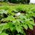 有機農業について