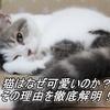 猫はなぜ可愛いのか? その理由を徹底解明!