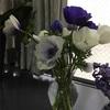 今朝の花々
