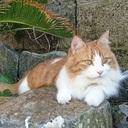 おひとりさまライフ 保護猫ちゃんと一緒