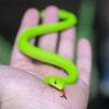 100円のヘビのおもちゃを買ってみました