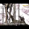 6月9日(金)仕事の流儀、和田博幸桜守人